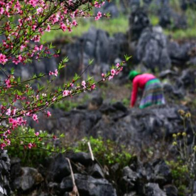 51 điểm chợ hoa xuân phục vụ tết Nguyên đán tại Hà Nội